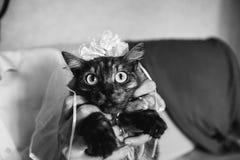 Chat noir drôle habillé en tant que jeune mariée dans un voile Photo libre de droits
