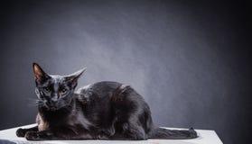 Chat noir espiègle futé sur un fond noir images libres de droits