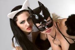 Chat noir et blanc Photo stock