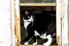 Chat noir et blanc Photo libre de droits