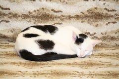 Chat noir et blanc Image libre de droits