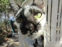 Chat noir et blanc au Brésil Amérique du Sud image libre de droits