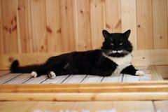 Chat noir et blanc avec la moustache de peluche Photos stock