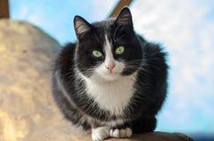 Chat noir et blanc avec les yeux verts se reposant sur un rondin Photographie stock libre de droits