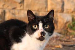 Chat noir et blanc dans Dubrovnik images stock