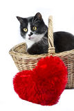 Chat noir et blanc dans un panier avec un oreiller rouge de coeur Images stock