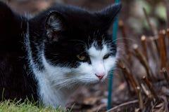 Chat noir et blanc dans un parterre photographie stock
