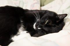 Chat noir et blanc paresseux baîllant sur le lit Image libre de droits