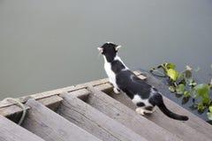 Chat noir et blanc regardant fixement au canal Photo libre de droits