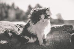 Chat noir et blanc rural Images libres de droits