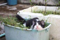 Chat noir et blanc se reposant dans le panier d'usine Image stock