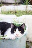 Chat noir et blanc se reposant dans le panier d'usine Images libres de droits