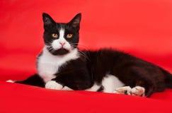 Chat noir et blanc se trouvant sur le rouge Photographie stock libre de droits