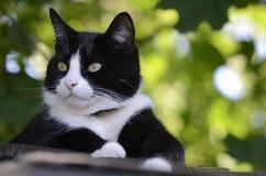 Chat noir et blanc sur le toit Photo libre de droits