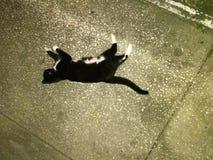 Chat noir et blanc sur une allée concrète Images stock