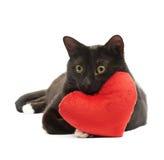 Chat noir et coeur rouge image stock