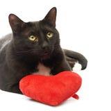 Chat noir et coeur rouge image libre de droits