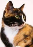 Chat noir et orange photographie stock libre de droits