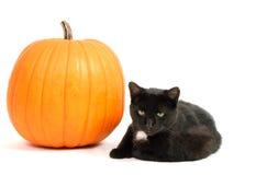 Chat noir et potiron Photographie stock