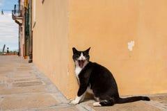 Chat noir fâché Image libre de droits