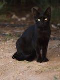 Chat noir futé Photographie stock libre de droits