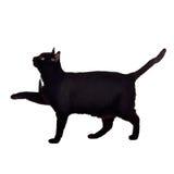 Chat noir marchant avec la patte vers le haut Image libre de droits