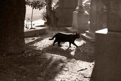 Chat noir marchant dans un cimetière Images libres de droits
