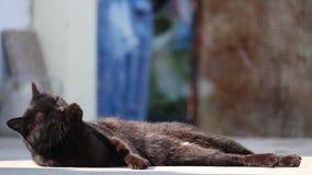 Chat noir mignon, très décontracté, se couchant et léchant la patte et se toilettant dehors dans le jour lumineux banque de vidéos