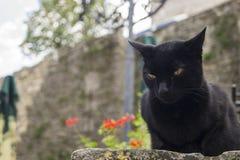 Chat noir mystérieux photo libre de droits