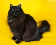 Chat noir pelucheux avec les yeux verts se reposant sur le jaune Photo libre de droits