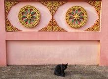 Chat noir près de mur au temple thaïlandais Hadyai, Songkhla, Thaïlande Photos stock