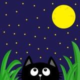 Chat noir regardant les étoiles et la lune pendant la nuit foncée Baisse de rosée d'herbe verte Personnage de dessin animé mignon Image stock