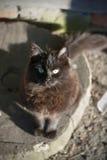 Chat noir reposant et regardant l'appareil-photo Photos libres de droits