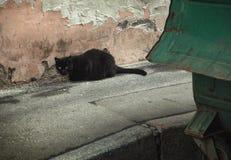 Chat noir sans abri sur le fond du mur et des déchets d'épluchage images stock