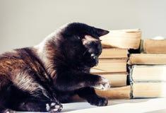 Chat noir se trouvant sur la table blanche, pile de vieux livres sur le fond photo libre de droits