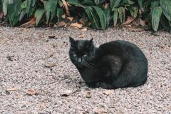 Chat noir se trouvant sur le plancher de pierres Photographie stock libre de droits