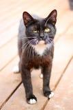 Chat noir semblant drôle Image stock