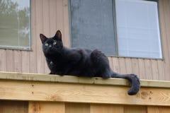 Chat noir sur la barrière Image stock