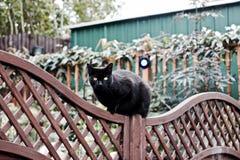 Chat noir sur la barrière Photo libre de droits