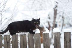 Chat noir sur le fond d'hiver Photographie stock
