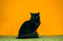 Chat noir sur le fond orange Photos libres de droits