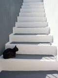 Chat noir sur les escaliers Photographie stock