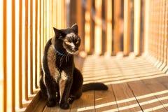 Chat noir sur un balcon Photographie stock libre de droits