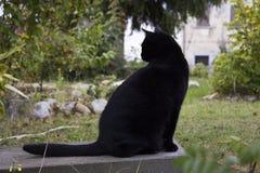 Chat noir sur un banc Image stock