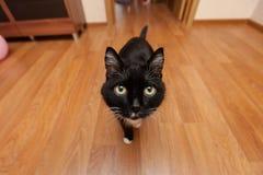 Chat noir sur un grand-angulaire photographie stock libre de droits