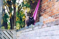Chat noir sur une frontière de sécurité Photographie stock libre de droits