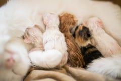 Chat nouveau-né avec Photographie stock