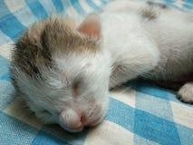Chat nouveau-né de détente de bébé photographie stock