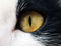 Chat observé Image libre de droits