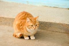Chat orange Photographie stock